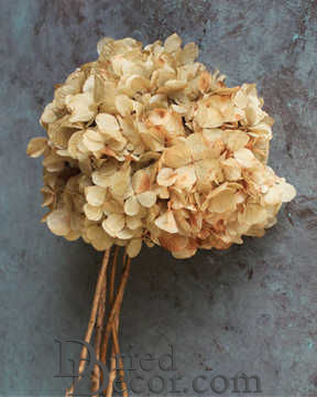 Preserved Hydrangea Natural 8 inch bunch