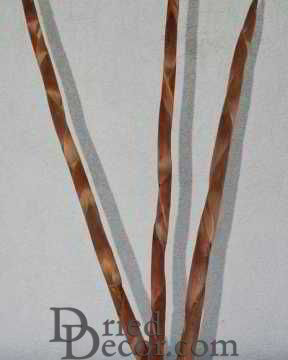 Dried Assegai Spears Dried
