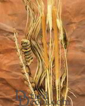 Dried Cattail Fall Bunch