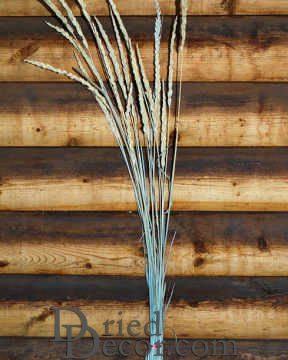 Dried Indian Grass - Natural