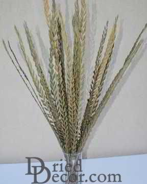 Dried Trim Grass (Stick) Green or Natural
