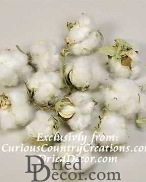 Natural Cotton Bolls (Cotton Balls)