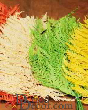 Dried Italian Ferns Fronds