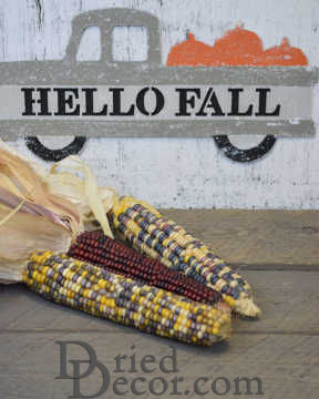 Decorative Indian Corn Seeds - Large