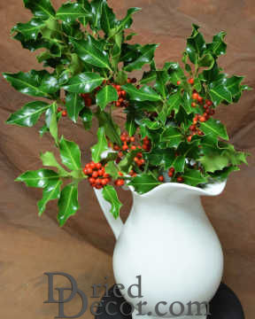 Preserved Fresh Holly Branches