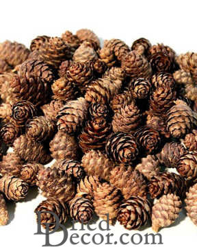 Black Spruce Cones - Small Cones [WW,009134050662]