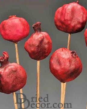 Dried Pomegranates Stemmed (Natural or Polished Case)