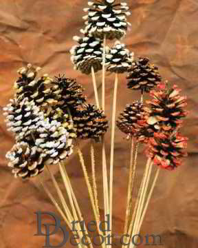 Painted, Tipped, Stemmed Pine Cones