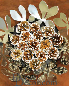 White Tipped Lodgepole Pine Cones