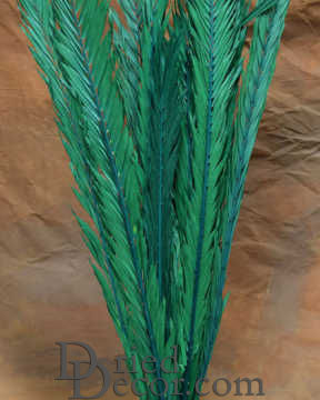 Dried Palm Leaves - Dried Palm Fronds