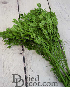 Decorative Dried Boxwood - Naturally Preserved