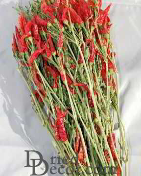 Dried Red Chili Peppers Bunch