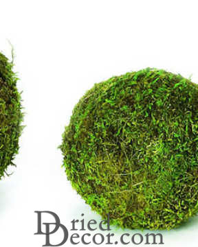 Dried Moss Balls - Preserved - 2,6,8 inch diameter