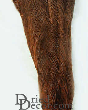 Dried Palm Fiber Sale - Coconut Palm