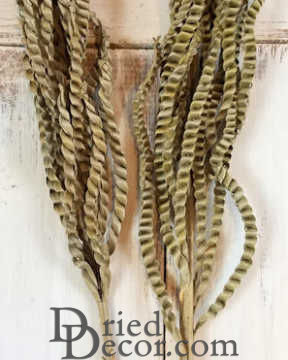Dried Braided Palm on Stemmed