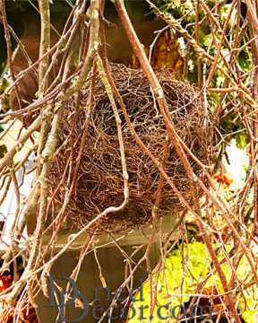 Dried Bird Nests - Natural Nest