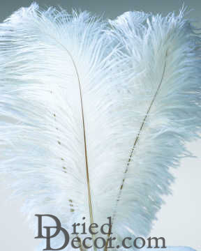 Ostrich Feathers - White Wing Plumes