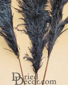 Dried Pampas Grass - Black Color