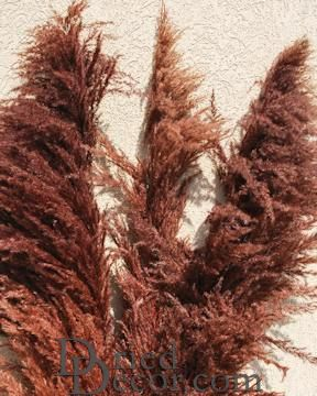 Dried Pampas Grass - Brown Color