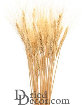 Bulk Case of Wheat Stalks - 15LB case