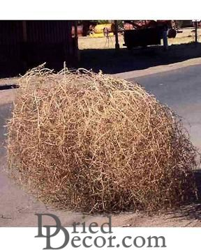Large Tumbleweed This