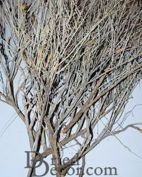 Dried Sagebrush Plant