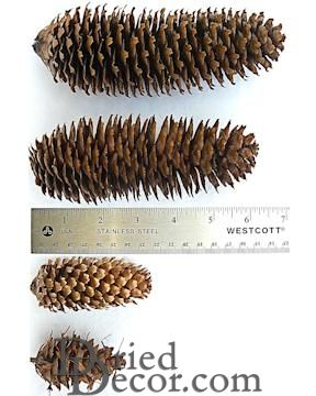 Assorted Spruce Pine Cones