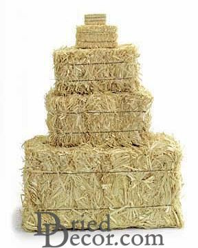 Buy Mini straw bales - 5 inch