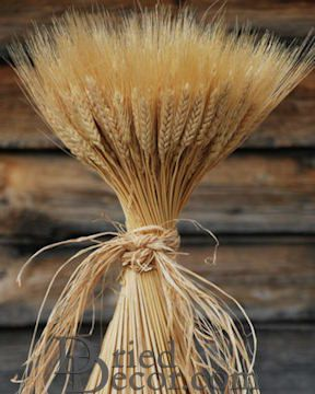 Large Dried Wheat Bundle - 1LB [BS,717435890099]