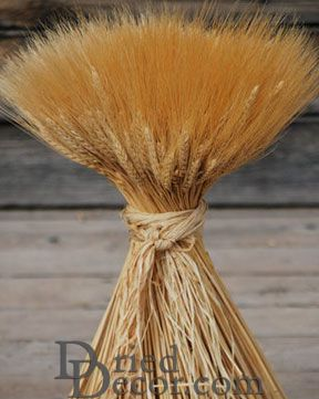 Extra Large Wheat Sheaves - 2LB Bunch