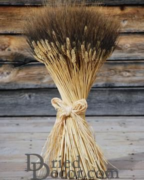 Extra Large Blackbeard Wheat Sheaves - 2lb bundles