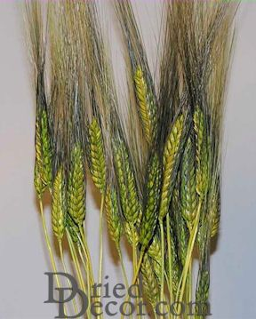 Dyed Blackbeard Wheat Bunch - 8oz Bulk