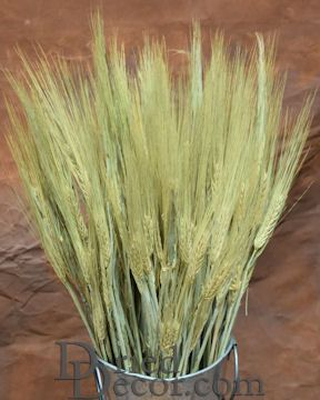Dried Six Row Barley