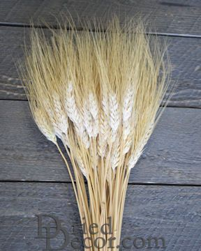 Wheat Stalks Bundle - 8oz blond