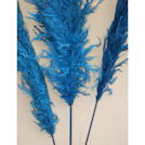 Dried Pampas Grass - Blue Color