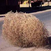 Large Country Tumbleweed