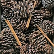 Cinnamon Scented Pine Cones with Cinnamon Sticks