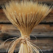 Large Dried Wheat Bundle - 1LB