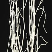 White Painted Birch Branches