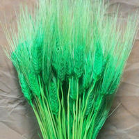 Green Wheat Bundle - Dyed