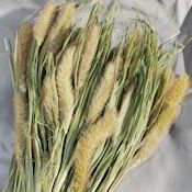 Dried Foxtail Millet